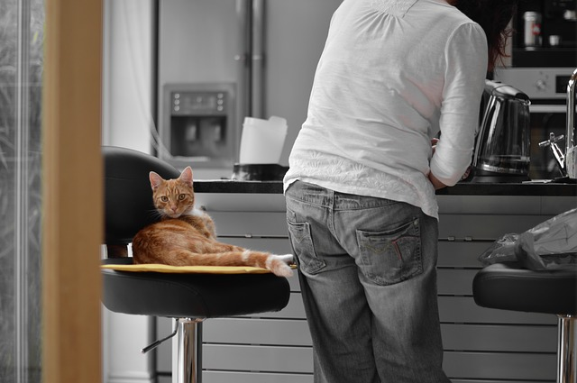 kočka na židli