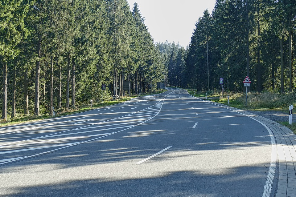 silnice v lese